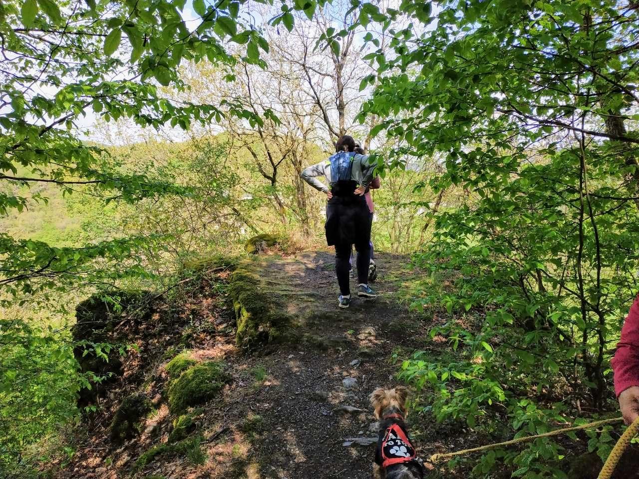 Die Bärenkopp Tour bietet zahlreiche Aussichtspunkte.