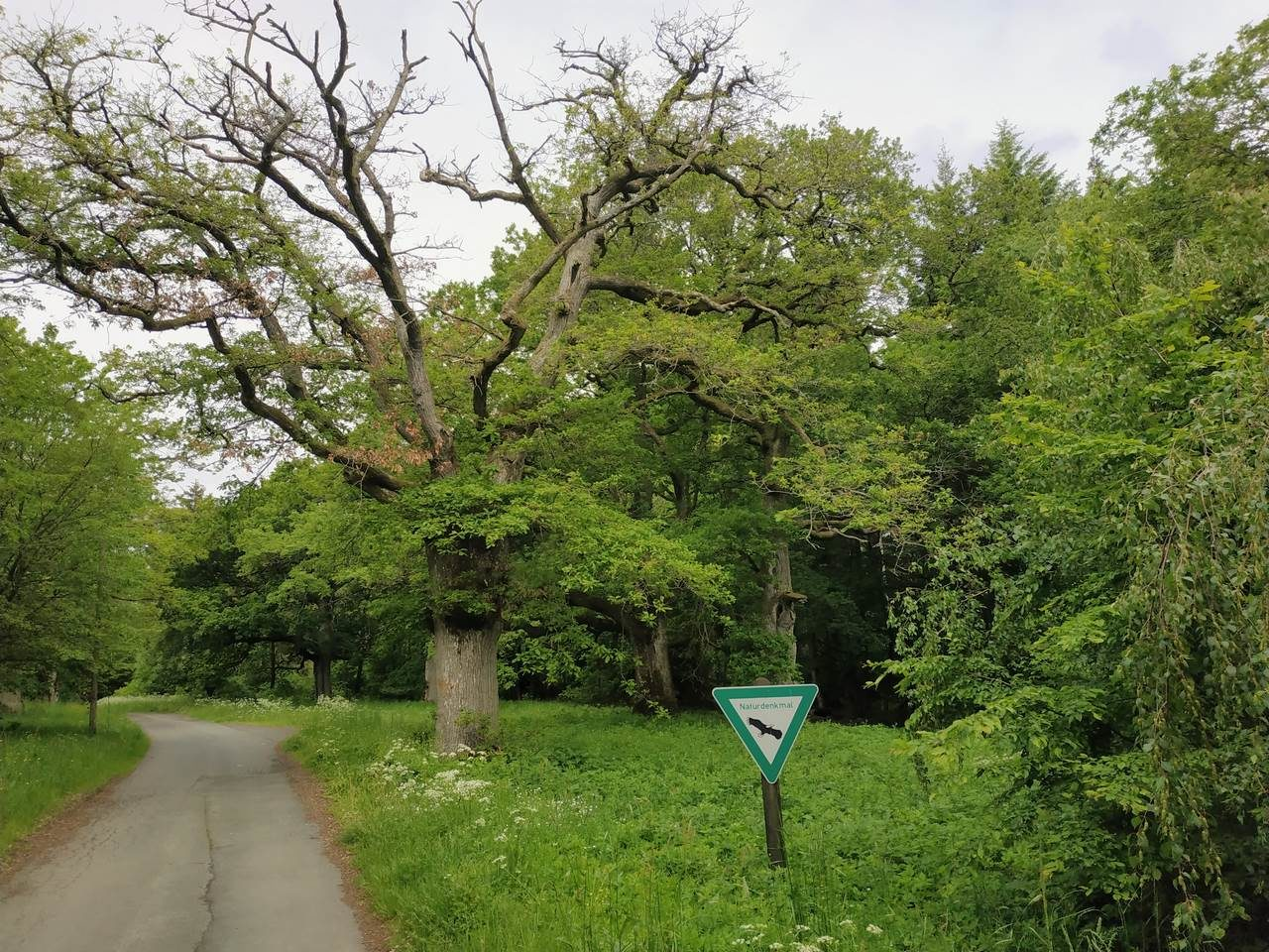 post_touren_waeller_tour_greifensteinschleife_8-1280-960.jpg