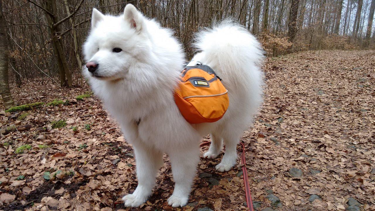 seite_dog_hiking_10_1280_720.jpg