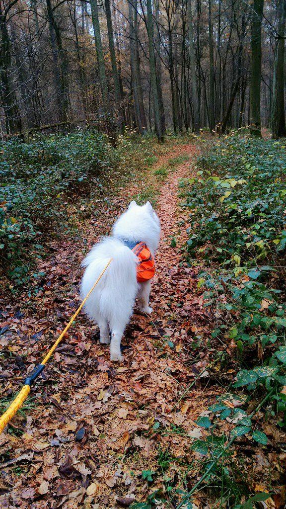 seite_dog_hiking_13_576_1024.jpg
