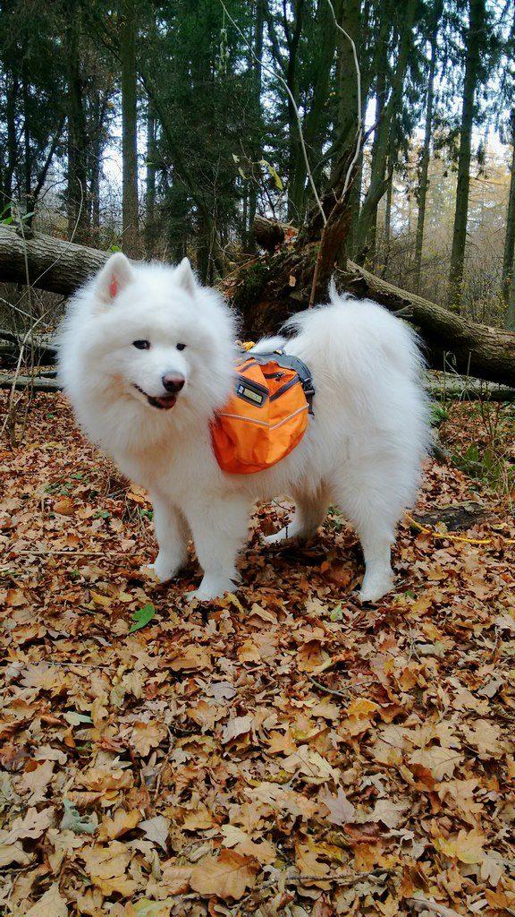 seite_dog_hiking_14_576_1024.jpg