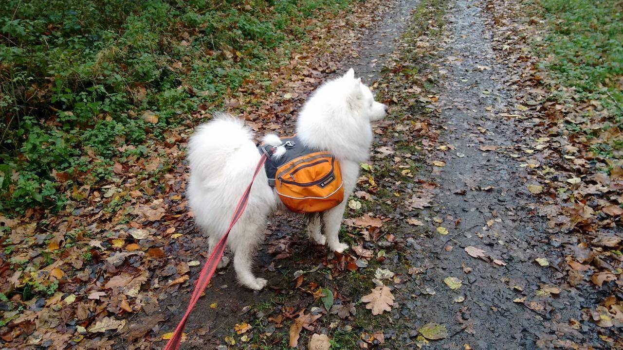 seite_dog_hiking_16_1280_720.jpg