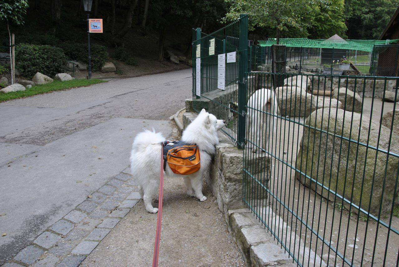 seite_dog_hiking_1_1280_857.jpg
