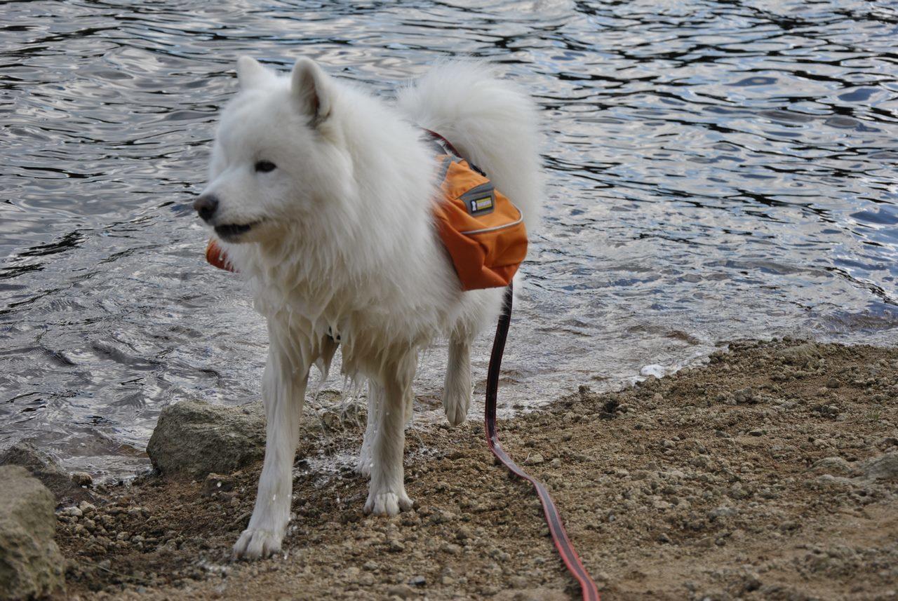 seite_dog_hiking_3_1280_857.jpg