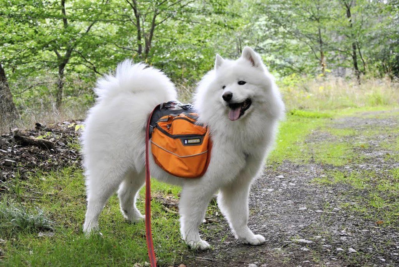seite_dog_hiking_4_1280_858.jpg