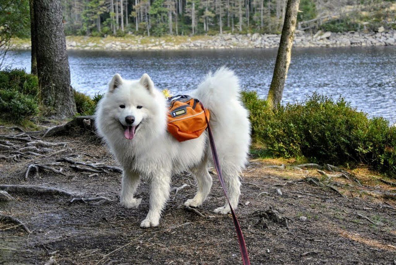seite_dog_hiking_5_1280_858.jpg