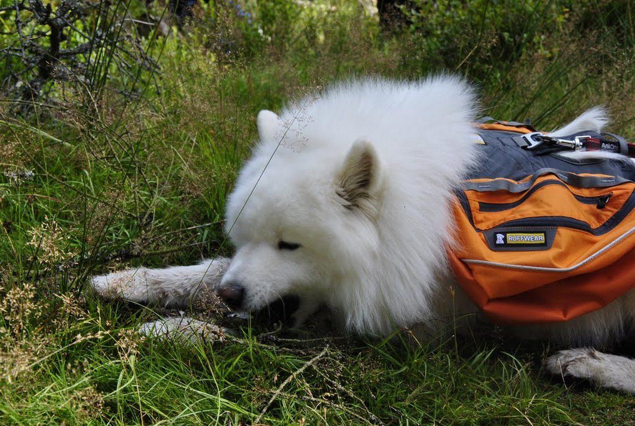 seite_dog_hiking_6_1280_858.jpg