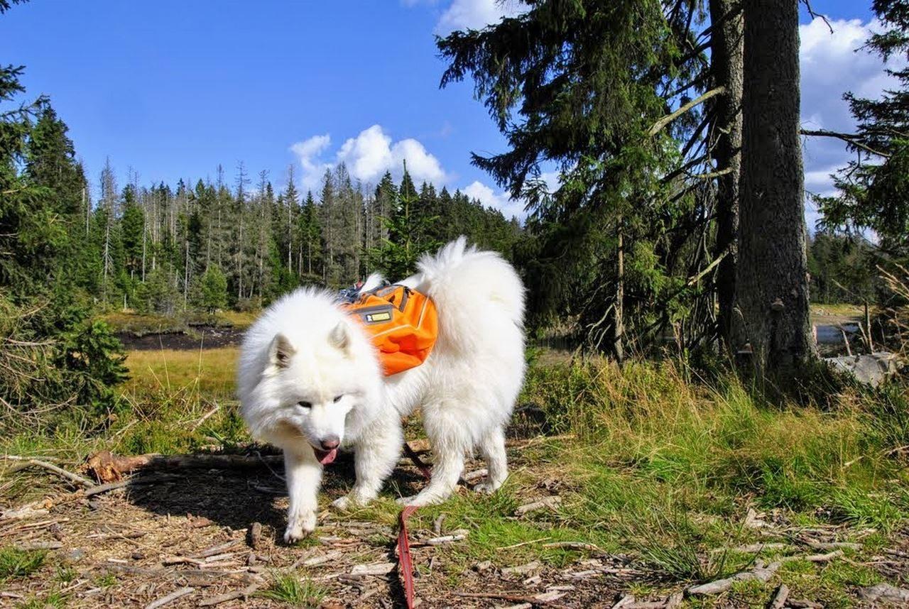 seite_dog_hiking_7_1280_858.jpg